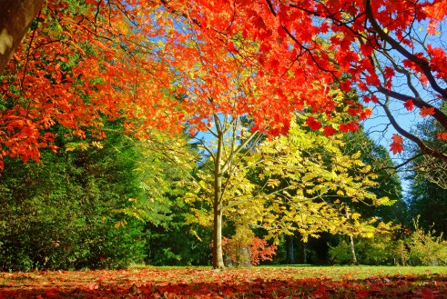 Westonbirt Arboretum - Things to do near The Bath Priory
